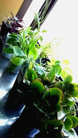観葉植物の写真です